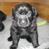 pups_4_weeks_001-medium