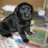 pups_4_weeks_003-medium