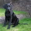 stanley_18_weeks-medium