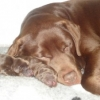 dogs-dec-2011-001-medium-300x225