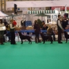 crufts11-004-medium