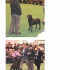 dyl-at-crufts-medium