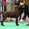 2013_03_09_crufts_13_5613_copy_web