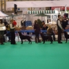 crufts11-004-medium_0